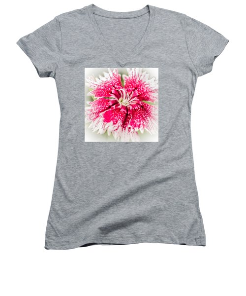 Dianthus Beauty Women's V-Neck T-Shirt (Junior Cut) by Yeates Photography