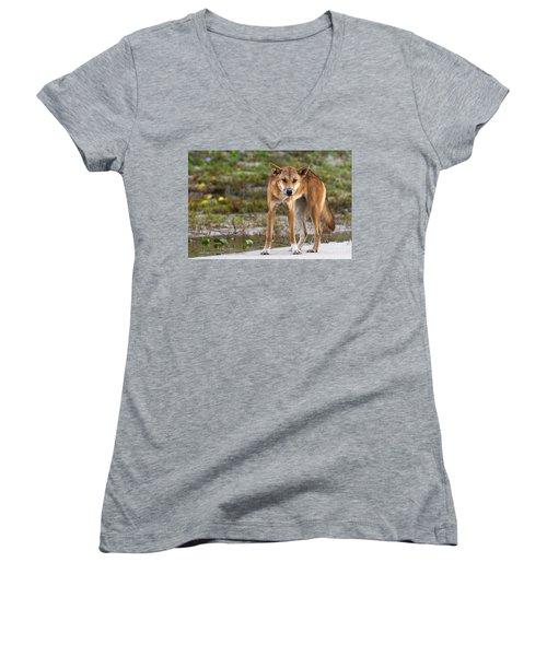 Dingo On 75 Mile Beach, Women's V-Neck T-Shirt