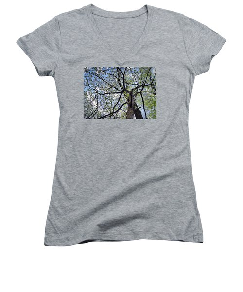 Dogwood Canopy Women's V-Neck (Athletic Fit)