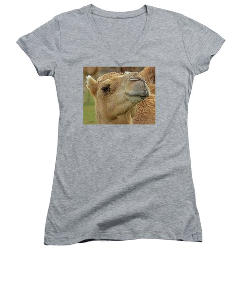 Dromedary Or Arabian Camel Women's V-Neck