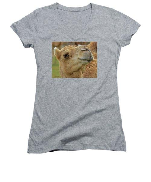 Dromedary Or Arabian Camel Women's V-Neck T-Shirt