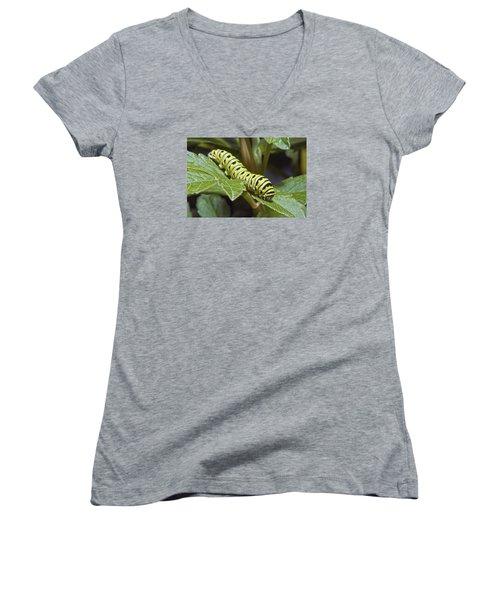 Eastern Black Swallowtail Caterpillar IIi Women's V-Neck T-Shirt