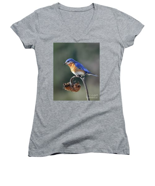 Eastern Bluebird In Spring Women's V-Neck (Athletic Fit)