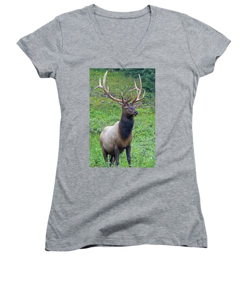 Women's V-Neck T-Shirt featuring the photograph Elk 5 by Gary Lengyel