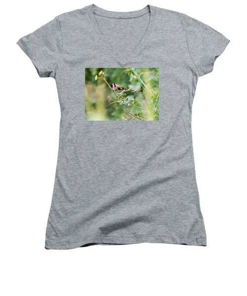 European Goldfinch Perched On Flower Stem B Women's V-Neck (Athletic Fit)