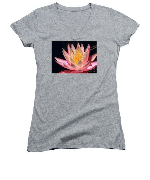Familiar Bluet Damselfly And Lotus 2 Women's V-Neck
