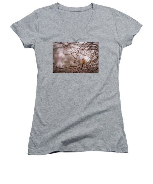 Women's V-Neck T-Shirt (Junior Cut) featuring the photograph Female Cardinal In Spring 2017 by Terry DeLuco