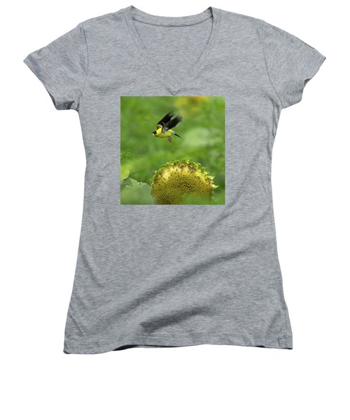 Finch Flight Women's V-Neck T-Shirt