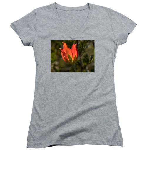 Women's V-Neck T-Shirt (Junior Cut) featuring the photograph Flaming Beauyy by Uri Baruch