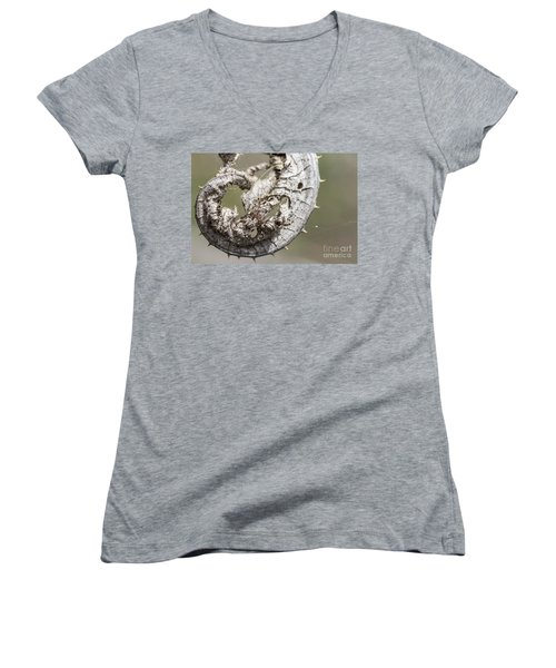 Women's V-Neck T-Shirt (Junior Cut) featuring the photograph Furrow Orb Weaver On A Dry Thisle Leaf by Jivko Nakev
