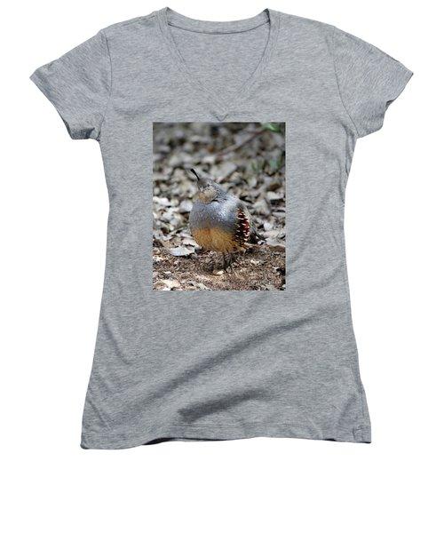 Gambel's Quail Women's V-Neck T-Shirt