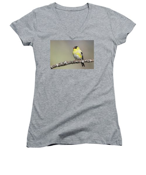 Gold Finch Women's V-Neck