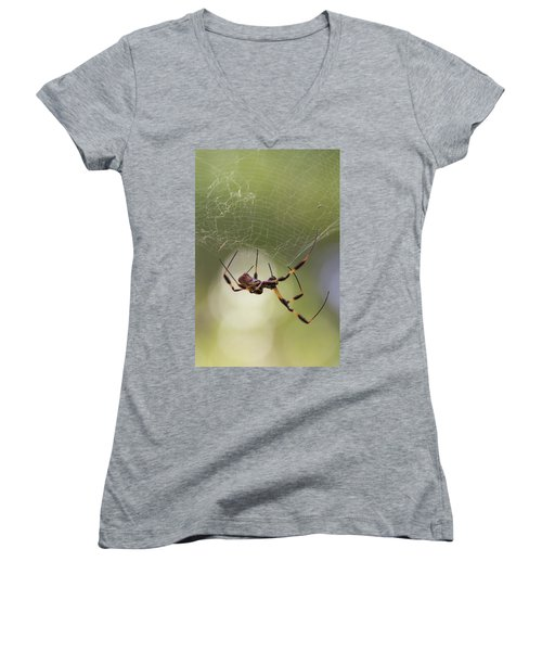 Golden-silk Spider Women's V-Neck T-Shirt