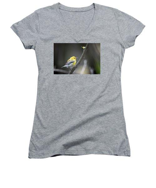 Golden Swamp Warbler Women's V-Neck T-Shirt (Junior Cut) by Gary Hall
