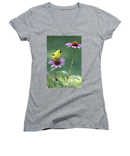 Goldfinch On A Coneflower Women's V-Neck (Athletic Fit)