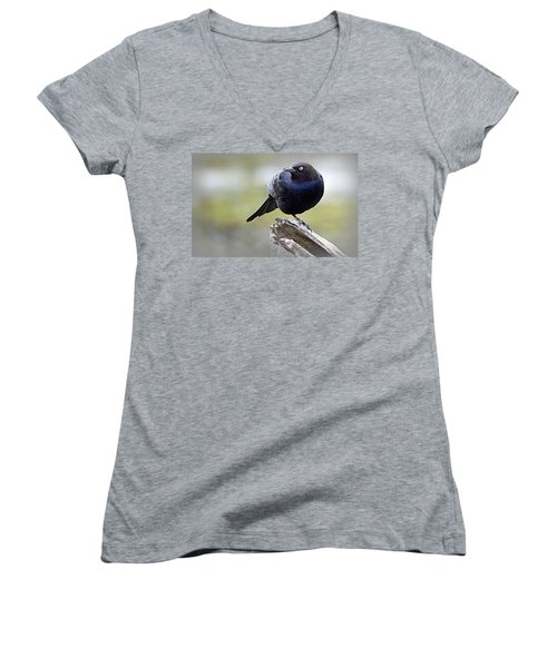 Grackle Resting Women's V-Neck (Athletic Fit)
