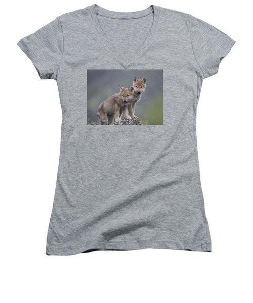Gray Wolf Canis Lupus Pups In Light Women's V-Neck