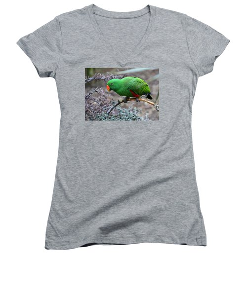 Green Male Eclectus Parrot Women's V-Neck (Athletic Fit)