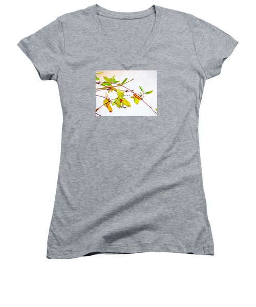 Green Twigs And Leaves Women's V-Neck T-Shirt (Junior Cut) by Craig Walters