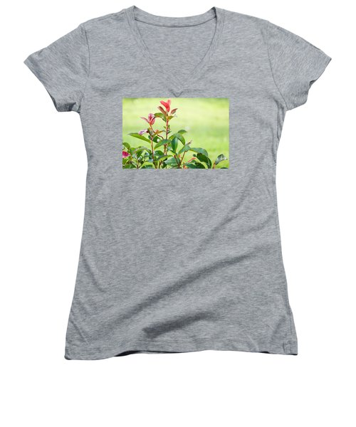 Greenery And Red Women's V-Neck