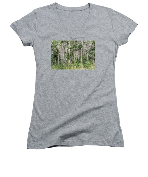 Grove Of Quaking Aspen Aka Quakies Women's V-Neck