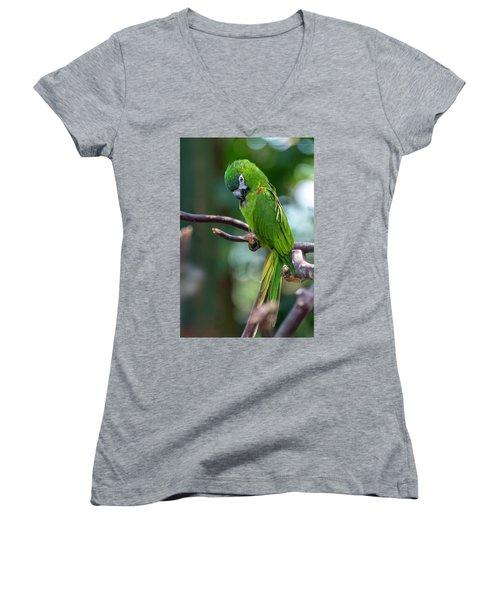 Hahn's Macaws Women's V-Neck