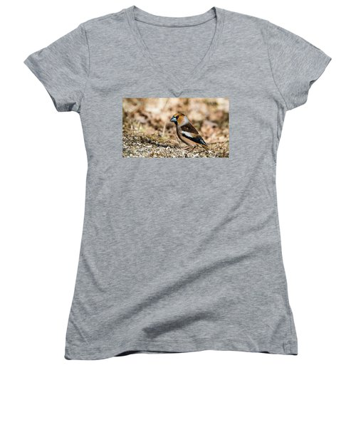 Women's V-Neck T-Shirt (Junior Cut) featuring the photograph Hawfinch's Gaze by Torbjorn Swenelius