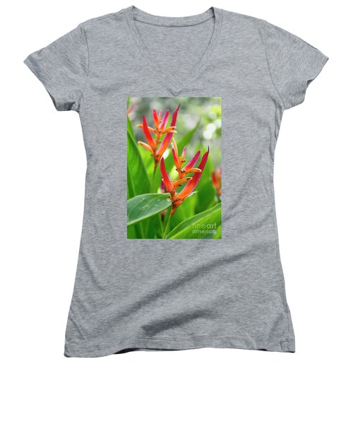 Heliconia Psittacorum Women's V-Neck (Athletic Fit)