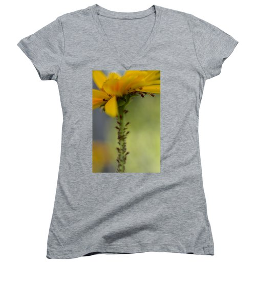 Heliopsis Infested Women's V-Neck T-Shirt (Junior Cut) by Janet Rockburn