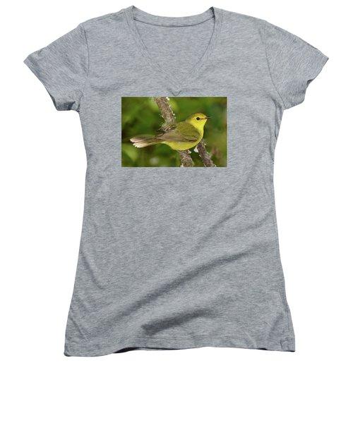 Hooded Warbler Female Women's V-Neck T-Shirt (Junior Cut) by Alan Lenk