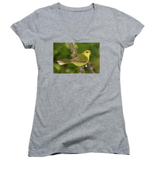 Hooded Warbler Female Women's V-Neck (Athletic Fit)