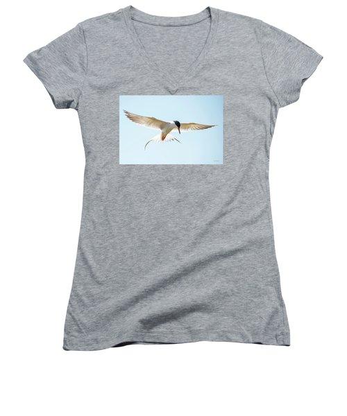Hovering Tern Women's V-Neck
