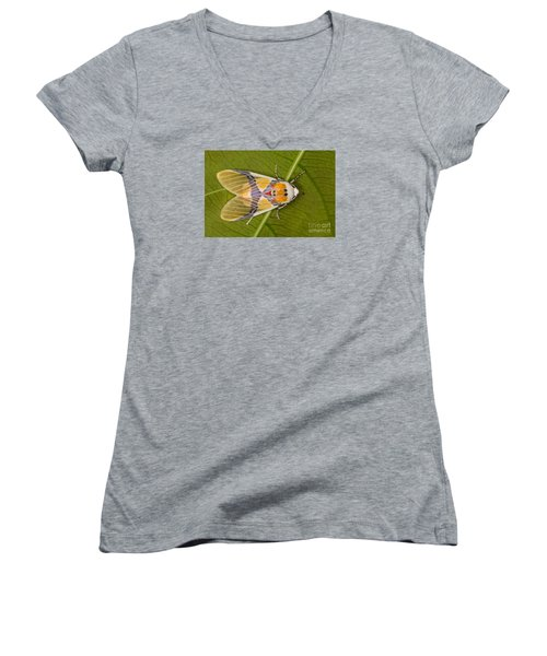 Women's V-Neck T-Shirt (Junior Cut) featuring the photograph Idalus Carinosa Moth by Gabor Pozsgai