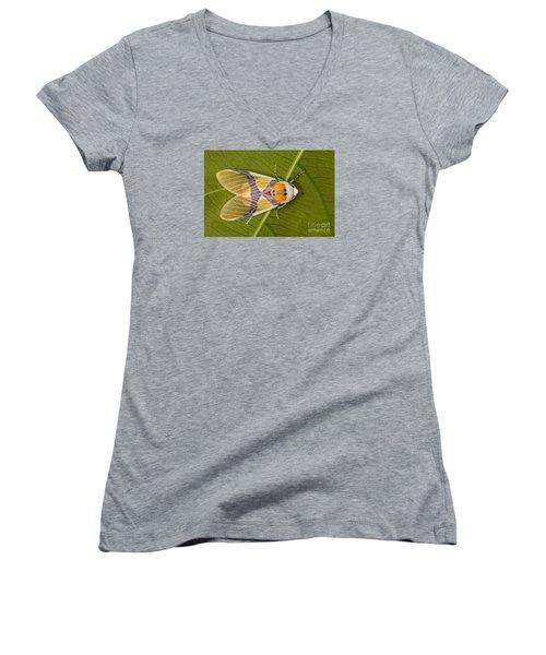 Idalus Carinosa Moth Women's V-Neck (Athletic Fit)
