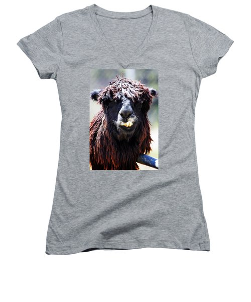 Women's V-Neck T-Shirt (Junior Cut) featuring the photograph Is Your Mama A Llama? by Anthony Jones