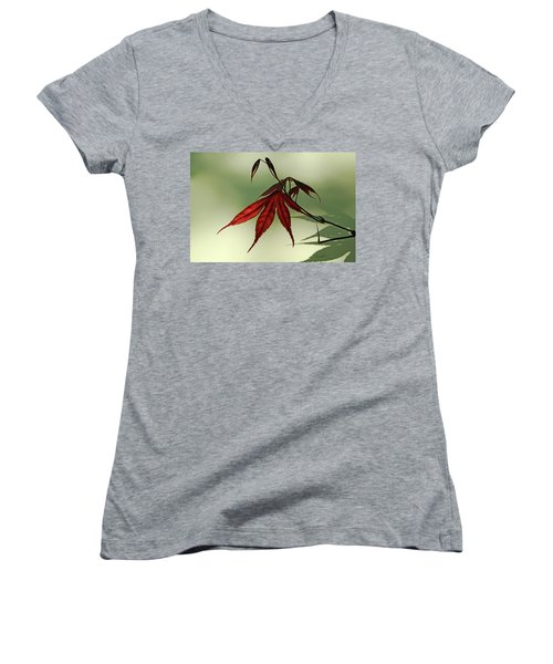 Women's V-Neck T-Shirt (Junior Cut) featuring the photograph Japanese Maple Leaf by Ann Lauwers
