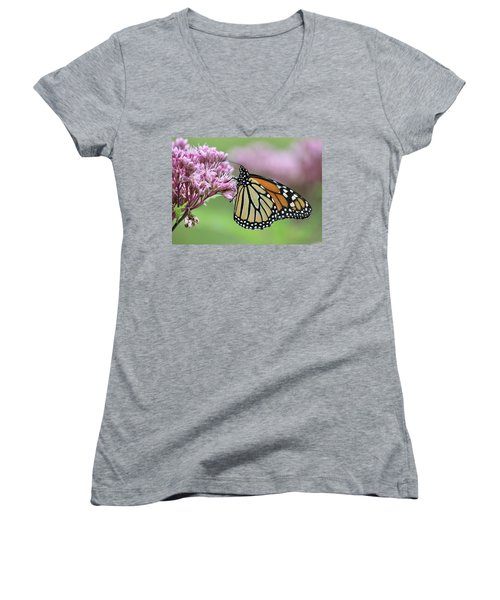 Joe-pye And The Wanderer Women's V-Neck (Athletic Fit)