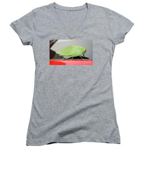 Katydids- Bush Crickets Women's V-Neck