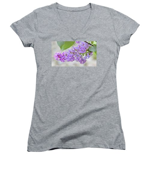 Lilac Cluster Women's V-Neck T-Shirt (Junior Cut) by Skip Tribby