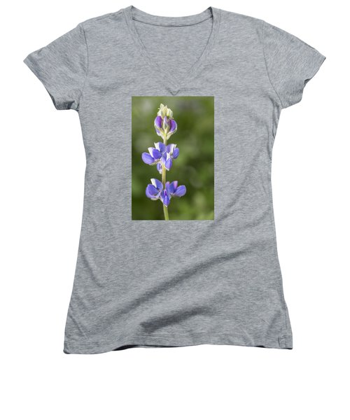 Little Lupine Women's V-Neck (Athletic Fit)