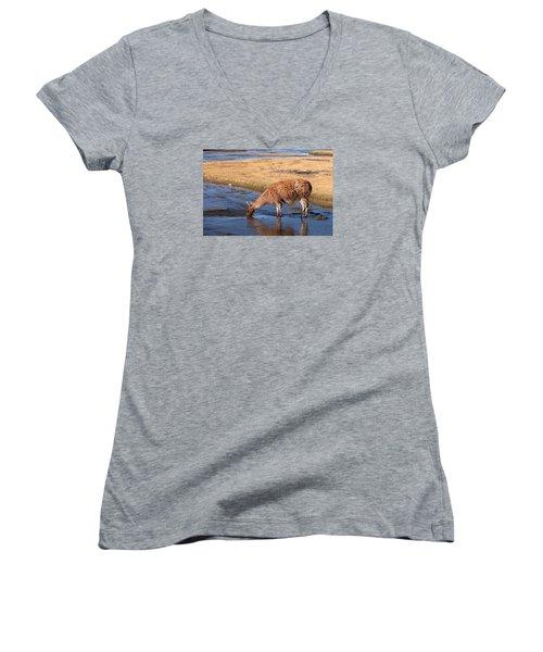 Llama Drinking In River Women's V-Neck T-Shirt (Junior Cut) by Aivar Mikko