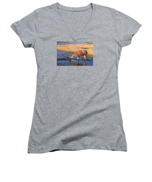 Llama Drinking In River Women's V-Neck (Athletic Fit)