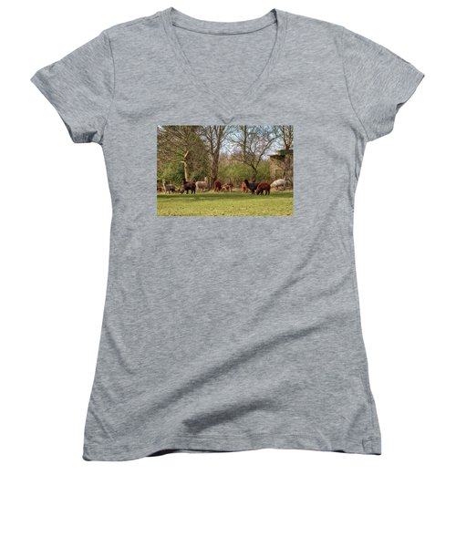 Women's V-Neck T-Shirt featuring the photograph Alpacas In Scotland by Jeremy Lavender Photography