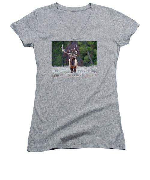 Majestic Bull Elk Women's V-Neck (Athletic Fit)