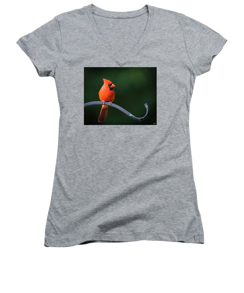 Male Cardinal At The Feeder Women's V-Neck (Athletic Fit)