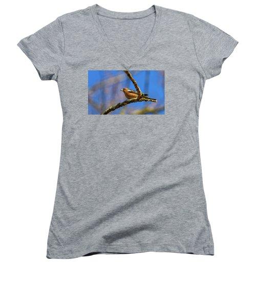 Male Common Chaffinch Bird, Fringilla Coelebs Women's V-Neck T-Shirt (Junior Cut) by Elenarts - Elena Duvernay photo