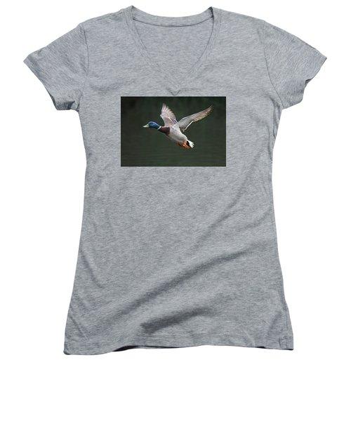 Mallard Drake In Flight Women's V-Neck
