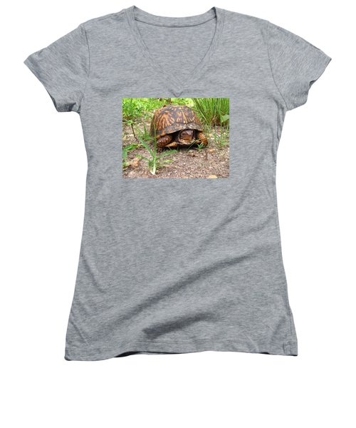 Maryland Box Turtle Women's V-Neck (Athletic Fit)