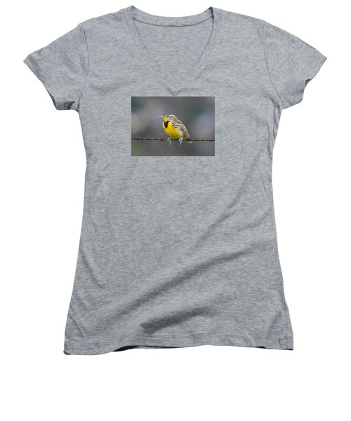 Meadowlark On Barbed Wire Women's V-Neck T-Shirt (Junior Cut) by Marc Crumpler