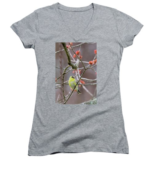 Women's V-Neck T-Shirt (Junior Cut) featuring the photograph Molting Gold Finch by Bill Wakeley
